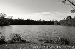Nature (Vasona 14) 4.25.11