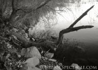 Nature (Vasona 5) 2.9.11