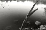 Nature (Vasona 6) 2.9.11