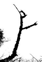 silhouette15