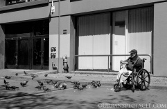 Streets of San Francisco (Feeding the Pigeons) 8.5.15