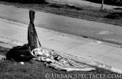 Streets of San Francisco (Homeless Dog) 6.19.13